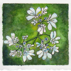 #WorldWatercolor Month July 10 Corainder