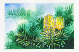 #WorldWatercolorMonth July2 Banksia