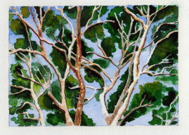 #WorldWatercolorMonth July 4 Gum Branches