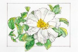 #WorldWatercolor Month July 5 Camellia