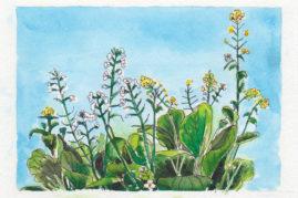 #WorldWatercolor Month July6 veg flower seeds