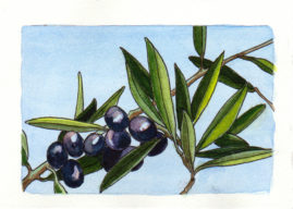 #WorldWatercolor Month July 8 Olive Branch