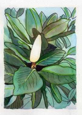 Magnollia Bud ©KarenSmith