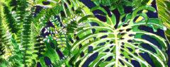 Monstera and Ferns ©KarenSmith