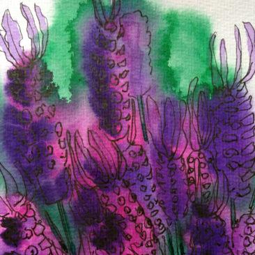 lavender ©KarenSmith
