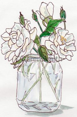 Roses in a jar - pen & watercolour
