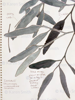gumleaves sketch greys
