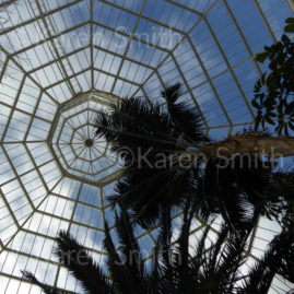 Sefton Park Palm House March 2017