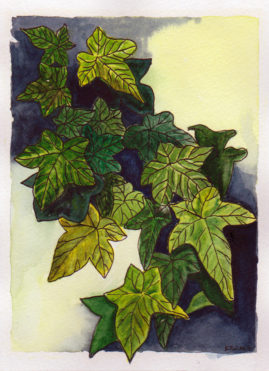 #WorldWatercolor Month July 14 Ivy Leaves