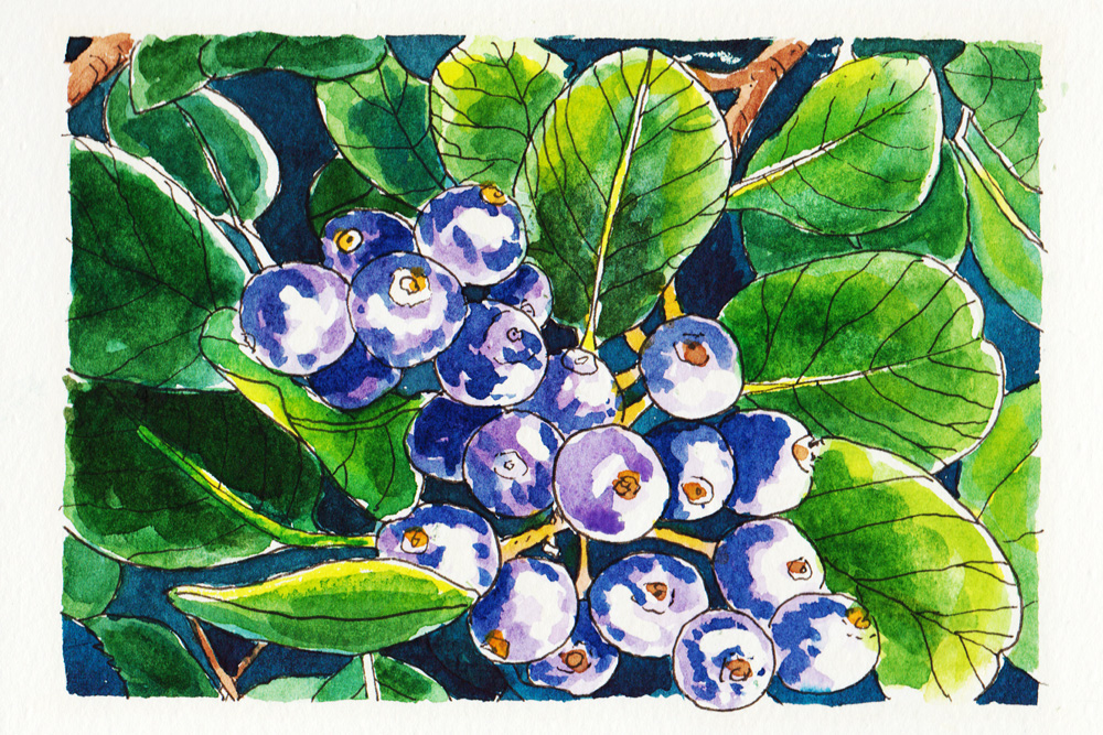 #WorldWatercolorMonth July1 Purple Berries