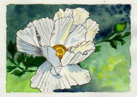 #WorldWatercolor Month July 9 Californian Poppy