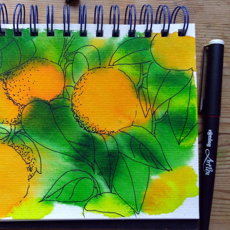 oranges_2 ©KarenSmith