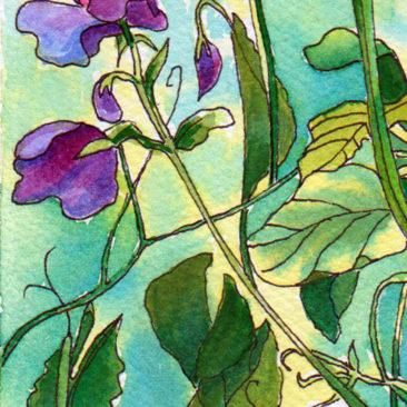 Sweet Pea Flowers ©KarenSmith
