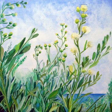 Saltbush Flowers ©KarenSmith