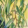 Sunny Gum Leaves 3 ©KarenSmith