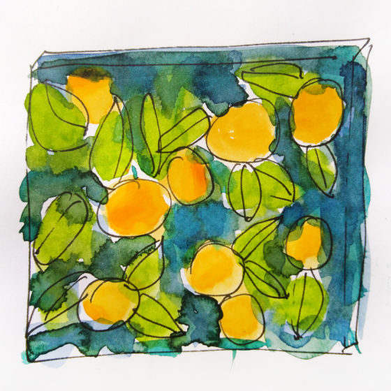oranges ©KarenSmith