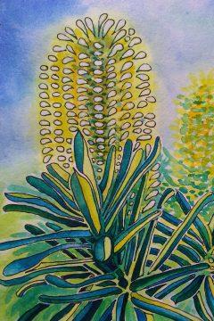 Banksia ©KarenSmith